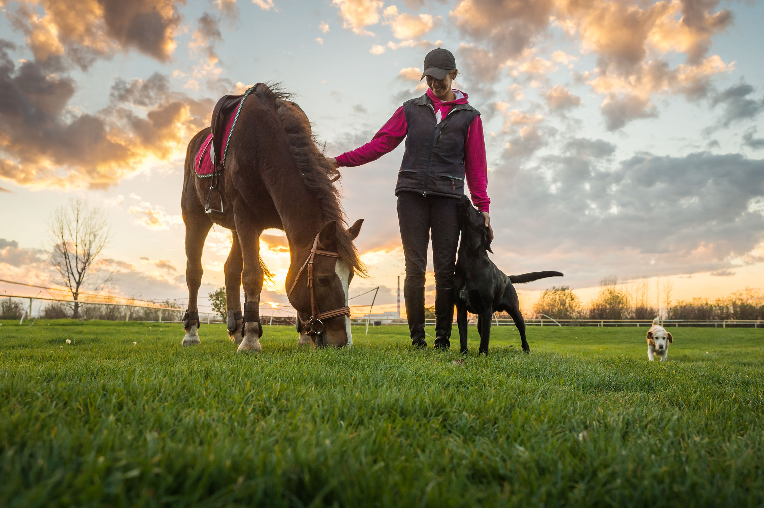 33818259 - girl and horse at sunset