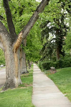 Denver Country Club Tree Lined Street