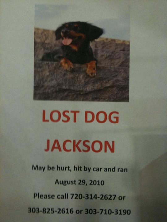 Jackson Lost Dog in Riverfront Park