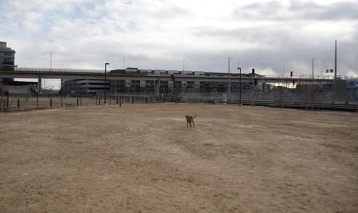 Railyard Dog Park New Surface at the Dog Park