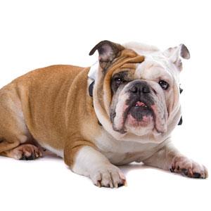 Bulldog Strategies for Winning
