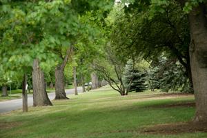 w P4I7974 Park Hill Colorado Real Estate