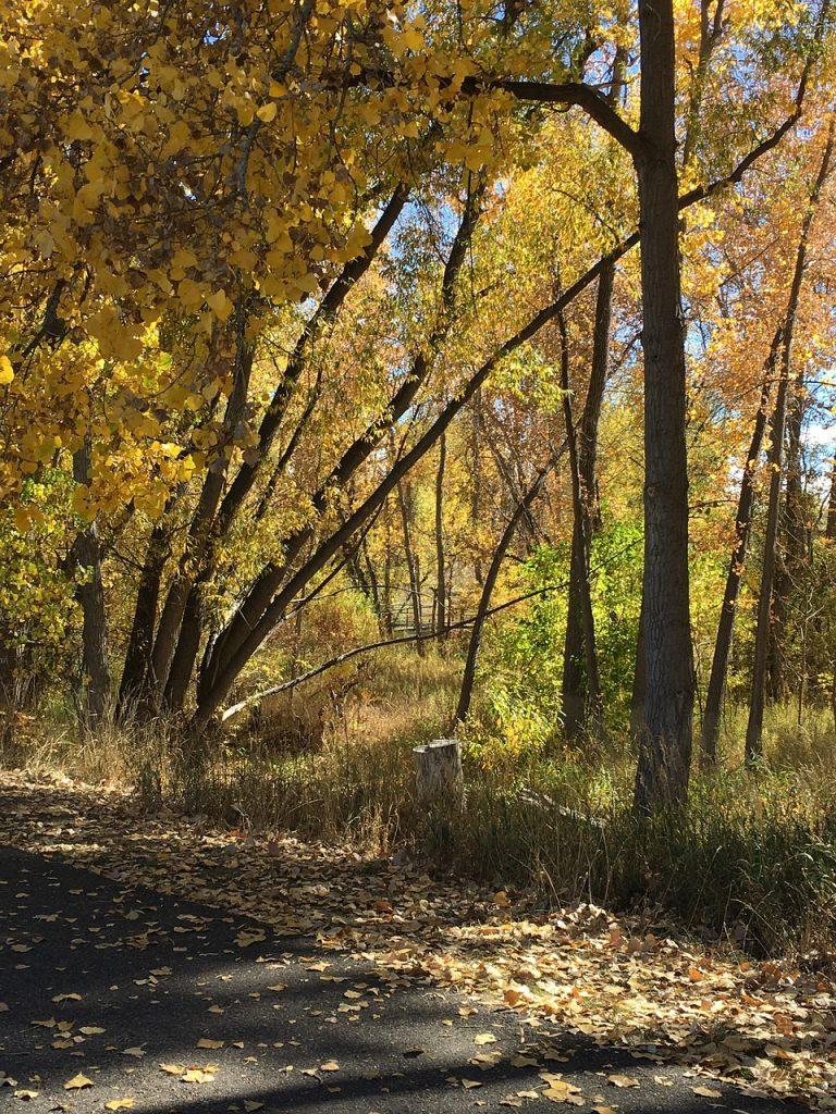 Denver Autumn Leaves