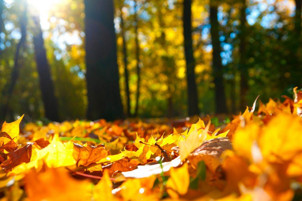 Denver Fall Leaves
