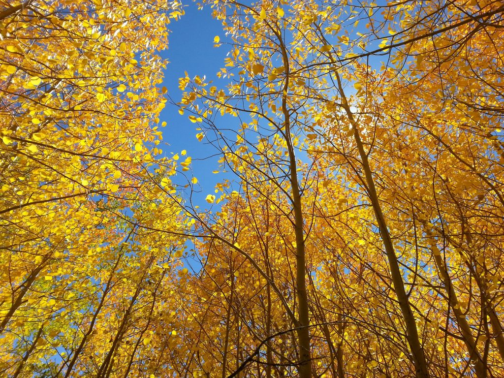 fall 2144507 1920 1024x768 Discover These 5 Spots That Will Peak at the End Of October for Denver Fall Leaves!