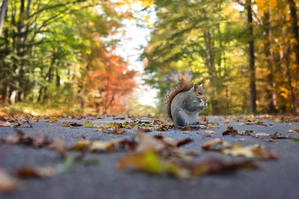 squirrel 1004893 1920 1024x683 Discover These 5 Spots That Will Peak at the End Of October for Denver Fall Leaves!