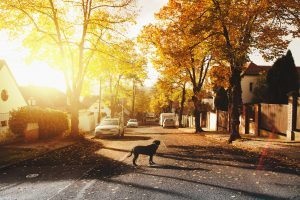 5 Tips For Staging Your House During The Fall Season