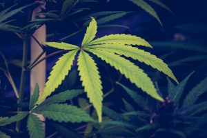 pot 300x200 IS LEGALIZED MARIJUANA DRIVING HOME PRICE INCREASES
