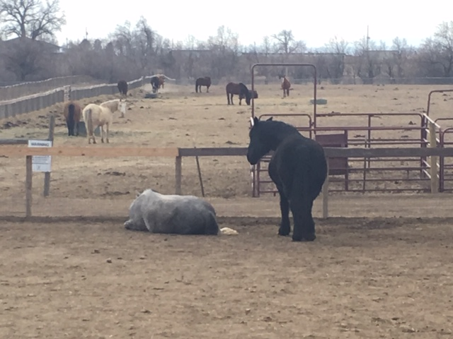 Odin and Dart in their paddock, Odin's Story