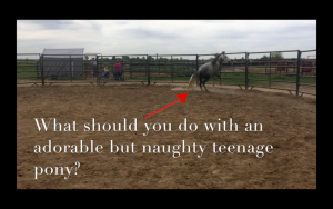 Odin rearing the the round pen with the caption: what should you do with an adorable but naughty teenage pony? Attitude Adjustment post.