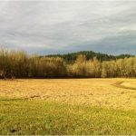McMinnville Oregon Acreage for Sale