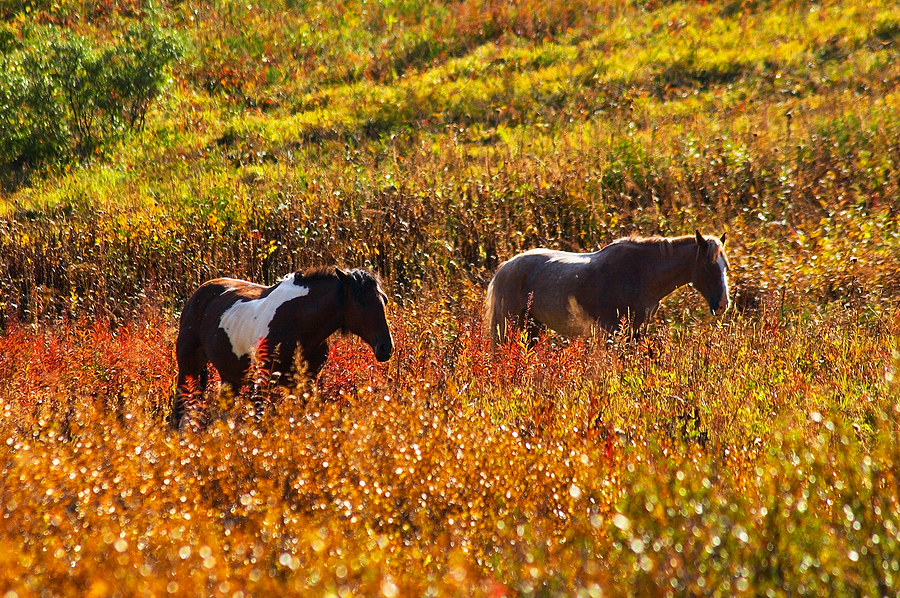 Two horses in Autumn