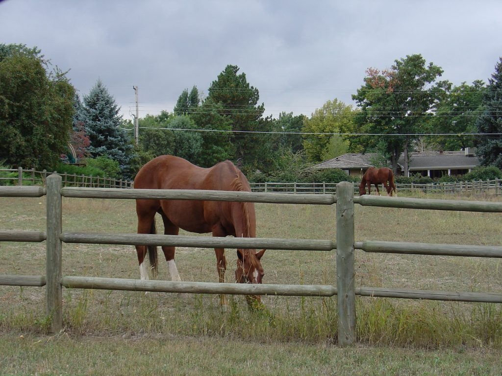 Horse Properties For Sale - Denver Metro CO