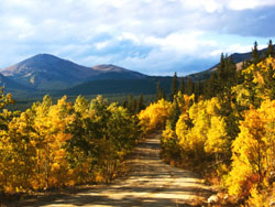 Aspens in Breckenridge