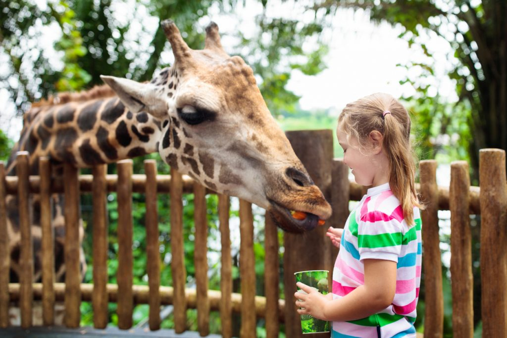 kid-friendly activity at zoo
