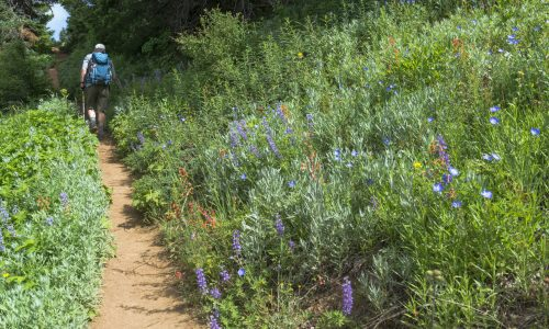 one of the wildflower trails in CO