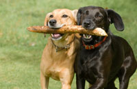 Denver Dogs