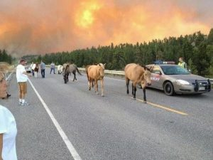 Colorado Wildfires and animals being rescued