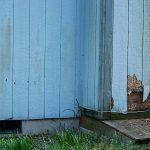 Should You Buy a House with Termite Damage?