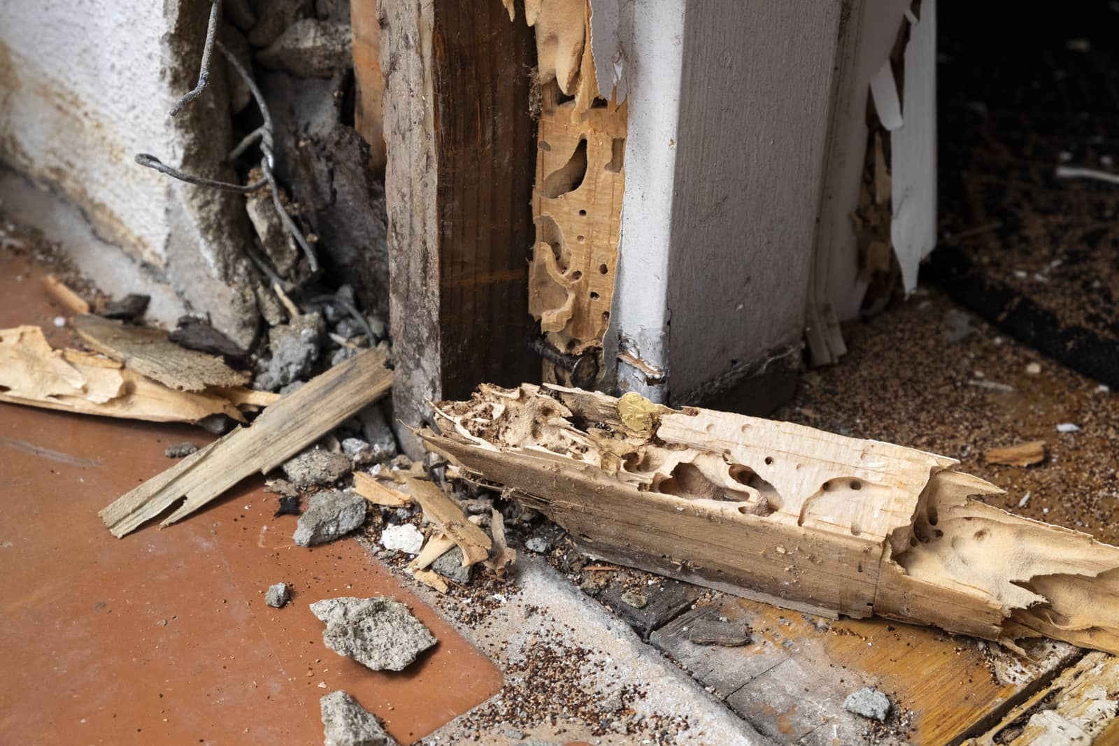 How Much Termite Damage is Too Much?